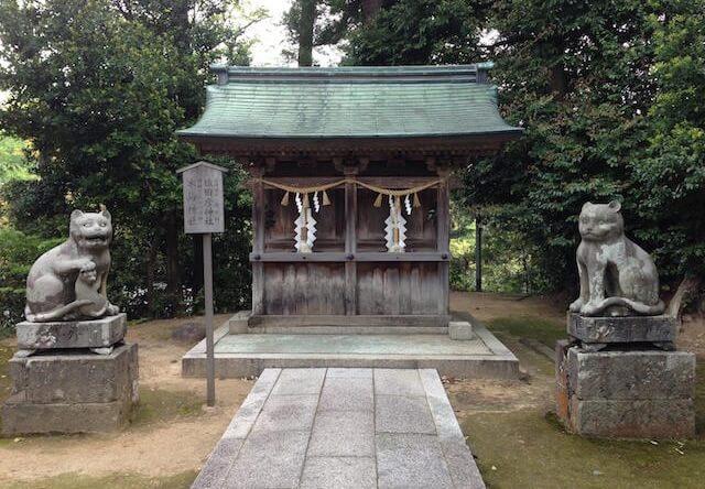 木島神社の狛猫