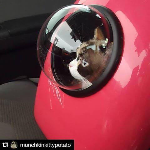 アニマリュックの窓から覗く猫