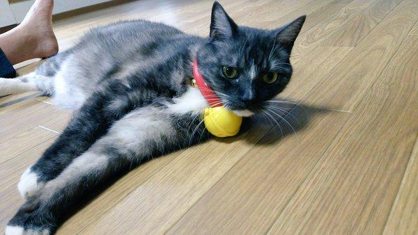 荒汐部屋の猫、モル