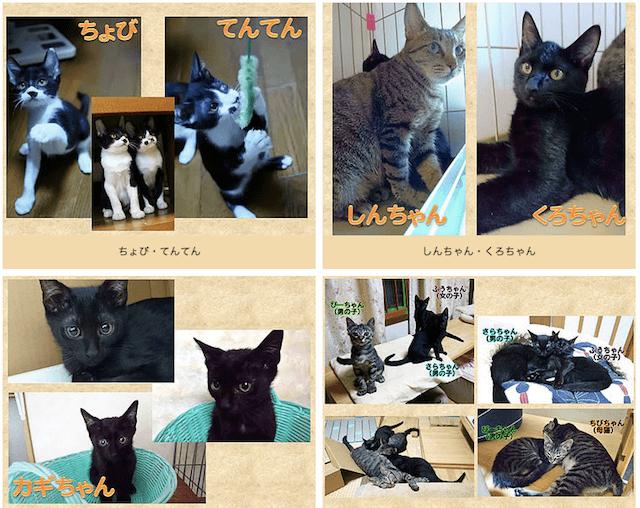 譲渡会に参加予定の猫(一部)
