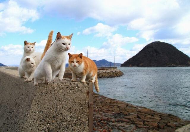 香川県・佐柳島(さなぎしま)の猫たち