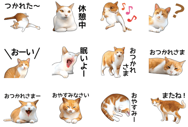 いろんな茶白猫 スタンプイメージ2