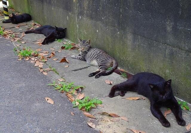 田代島で休憩している猫たち