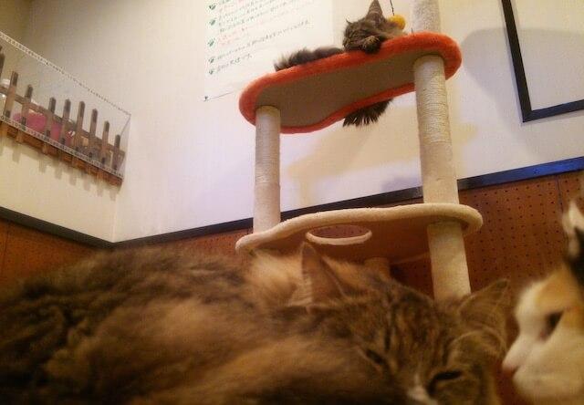 音々猫(ねねねこ)のキャットタワー