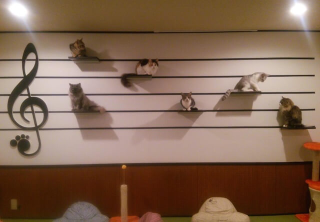 音々猫(ねねねこ)にある、楽譜デザインのキャットステップ