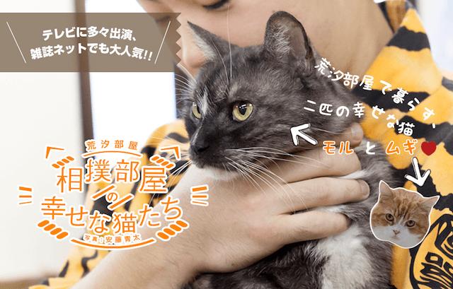 猫の写真集、相撲部屋の幸せな猫たち