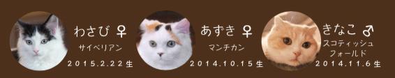 猫カフェMoCHAの人気猫「わさび」(原宿店)、「あずき」(原宿店)、「きなこ」(渋谷店)