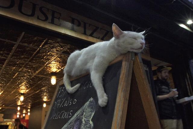 ブルックリンのピザ屋の看板で爆睡するネコ