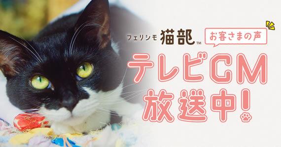 フェリシモ猫部 テレビCM