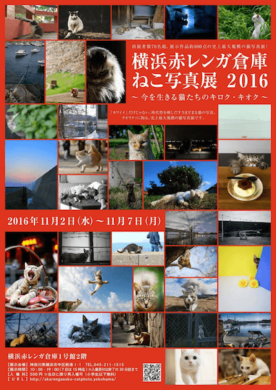横浜赤レンガ倉庫 ねこ写真展2016