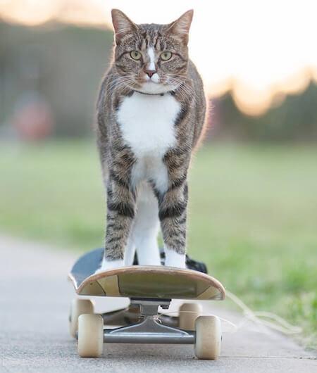 1分間に20個の芸ができるとしてギネス認定された猫「ディジャ(Didga)」