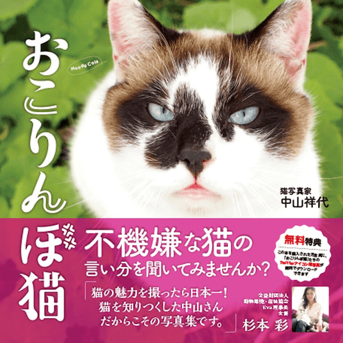 猫の写真集「おこりんぼ猫」