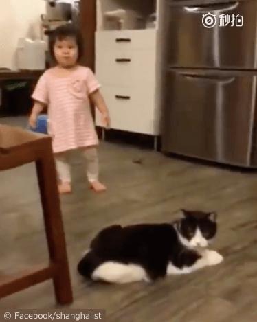 女の子を転ばせる猫の動画、動画の最初のシーン