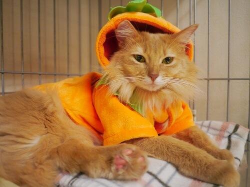 ハロウィンを悟った表情の猫