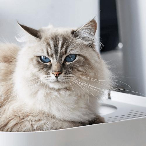 猫もお気に入り!?な猫トイレ「ModKat モドキャット」