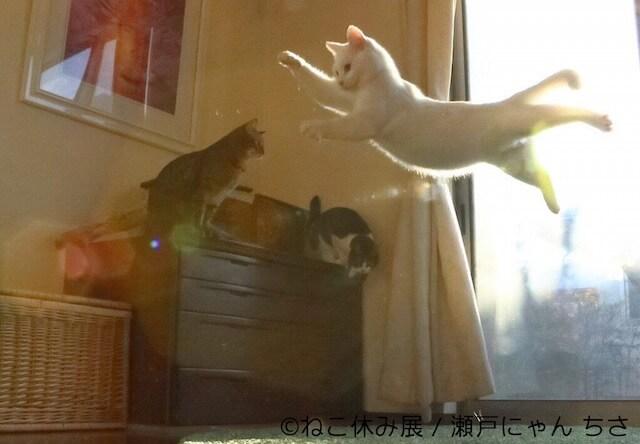 無力猫ミルコの写真
