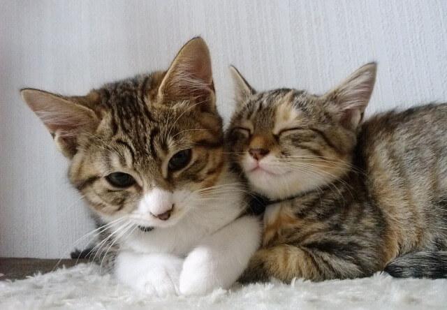 山形まなび館 猫の写真2