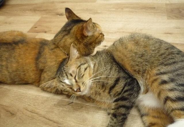 猫をオフィスに迎えたい企業に朗報!ネコと働く体験会が開催