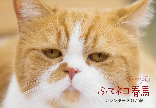 Y!mobileのCMに出演「ふてネコ春馬」の2017年カレンダーが発売