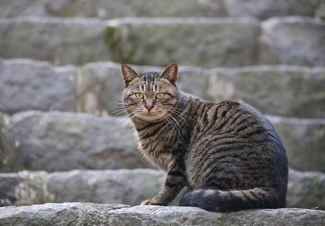神奈川県の真鶴町で地域猫イベント、第2回「まにゃづる」が開催