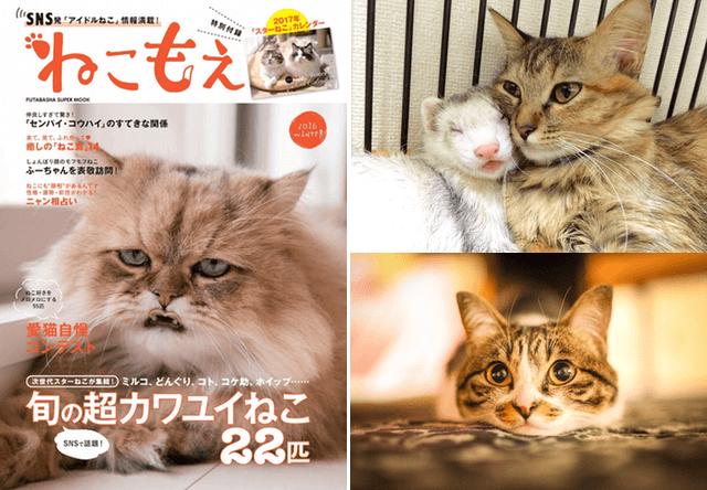 SNSの人気猫が満載!癒やしのムック本「ねこもえ」が発売