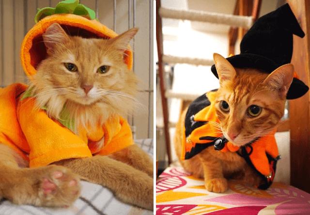 神戸の猫カフェ「cat cafe Nyanny(ニャニー)が10/29〜ハロウィンコスプレ開催