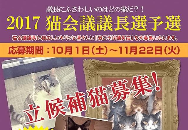 猫のダヤンのわちふぃーるど、猫会議の議長選予選を開催中!キリッとした愛猫の写真を募集