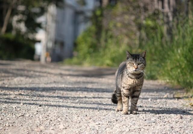 野良猫と地域の関わり方について学ぶ、第1回高知地域猫セミナー