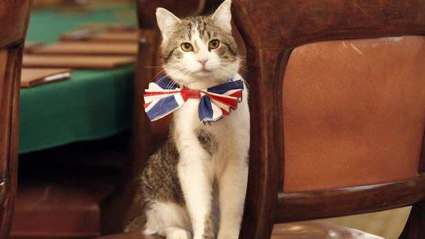 イギリス首相官邸 ネズミ捕獲長の猫「ラリー」