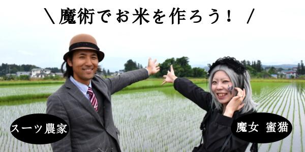 スーツ農家である齋藤氏に栽培を依頼して誕生したお米