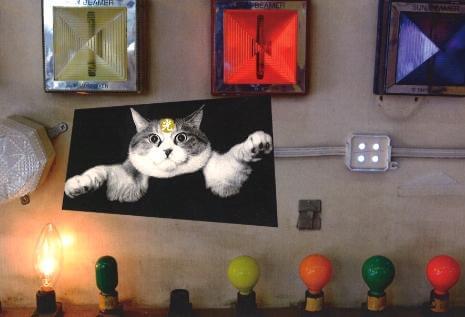 写真集「猫光線」の写真を展示