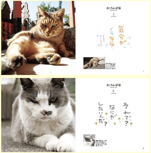 猫の写真集「おこりんぼ猫」の中身