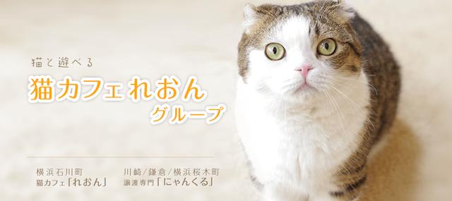 猫カフェれおんグループ