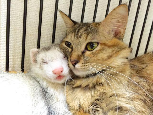 SNSで人気のアイドル猫の写真2