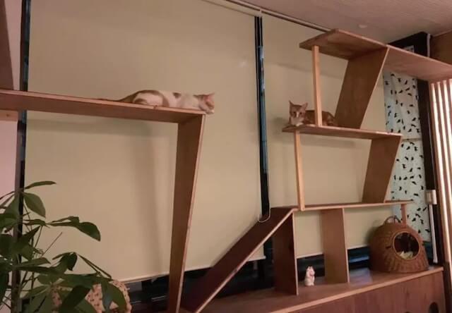 ゲストハウス「CATS INN TOKYO(キャッツイン東京)の猫カフェイメージ