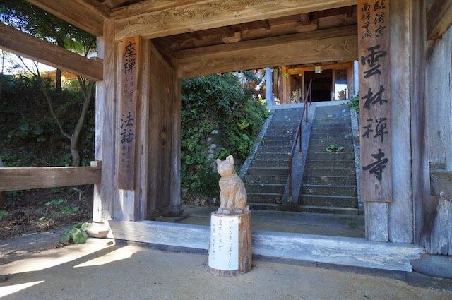 猫寺、雲林寺の猫