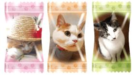 猫キャンディ「にゃんコレ」の個包装は100種類