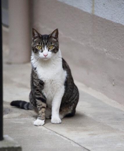 山形まなび館 猫の写真1