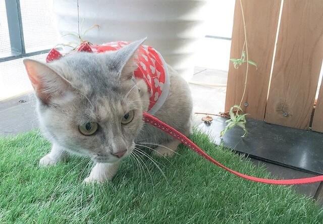 猫グッズの販売会「猫の雑貨集めました」に登場予定のネコ店長