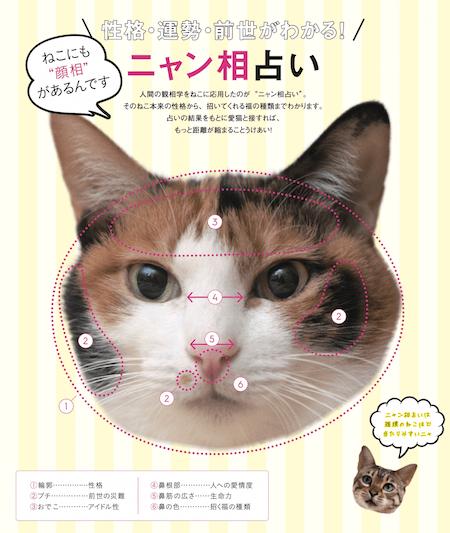 猫の性格・運勢・前世がわかる「ニャン相占い」