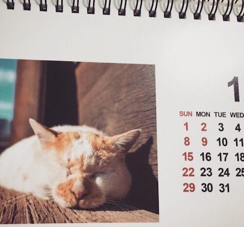 あおいとりさんの猫写真を元にした2017年度のカレンダー