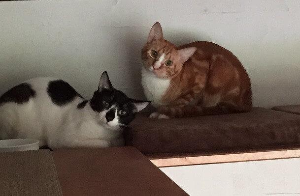 ゲストハウス「CATS INN TOKYO(キャッツイン東京)にいる猫スタッフたち