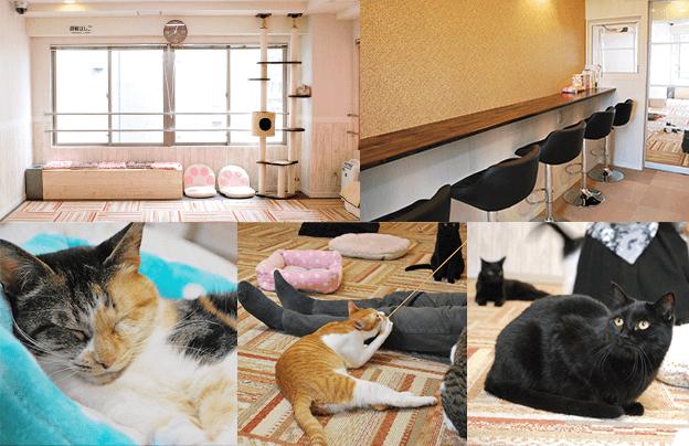 譲渡型猫カフェ「にゃんくる川崎店」の店内風景