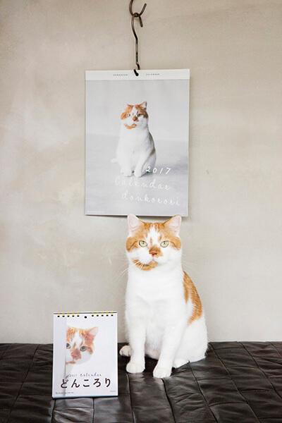 猫カレンダー どんころり