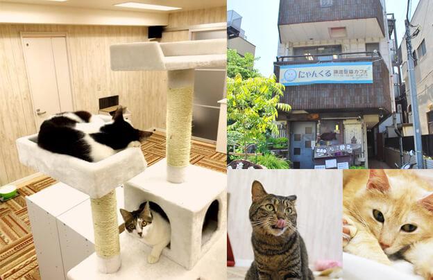 譲渡型猫カフェ「にゃんくる鎌倉店」の店内風景