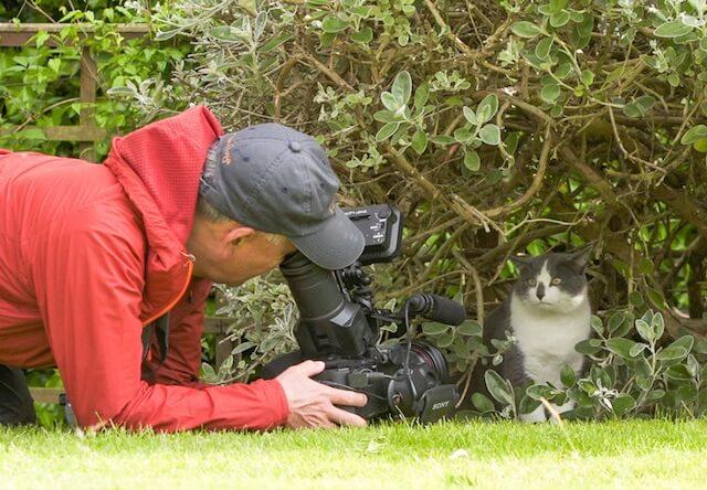 イングランドで出会った猫を撮影する岩合さん