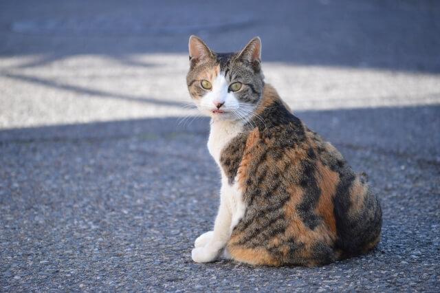 振り向く猫の写真