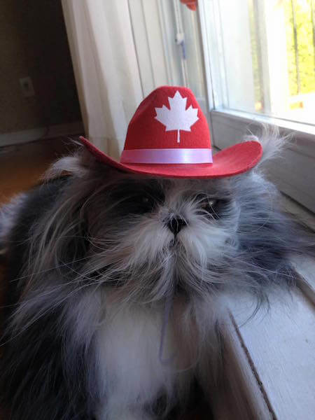 チョッパーみたいな帽子を被る猫