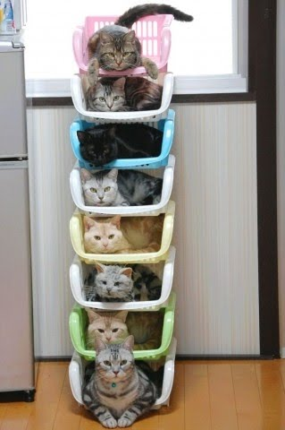 縦型ケースに収納される猫の写真