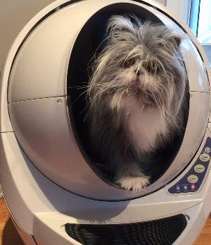次世代型ネコトイレも大好きな猫、アチョム(Atchoum)くん